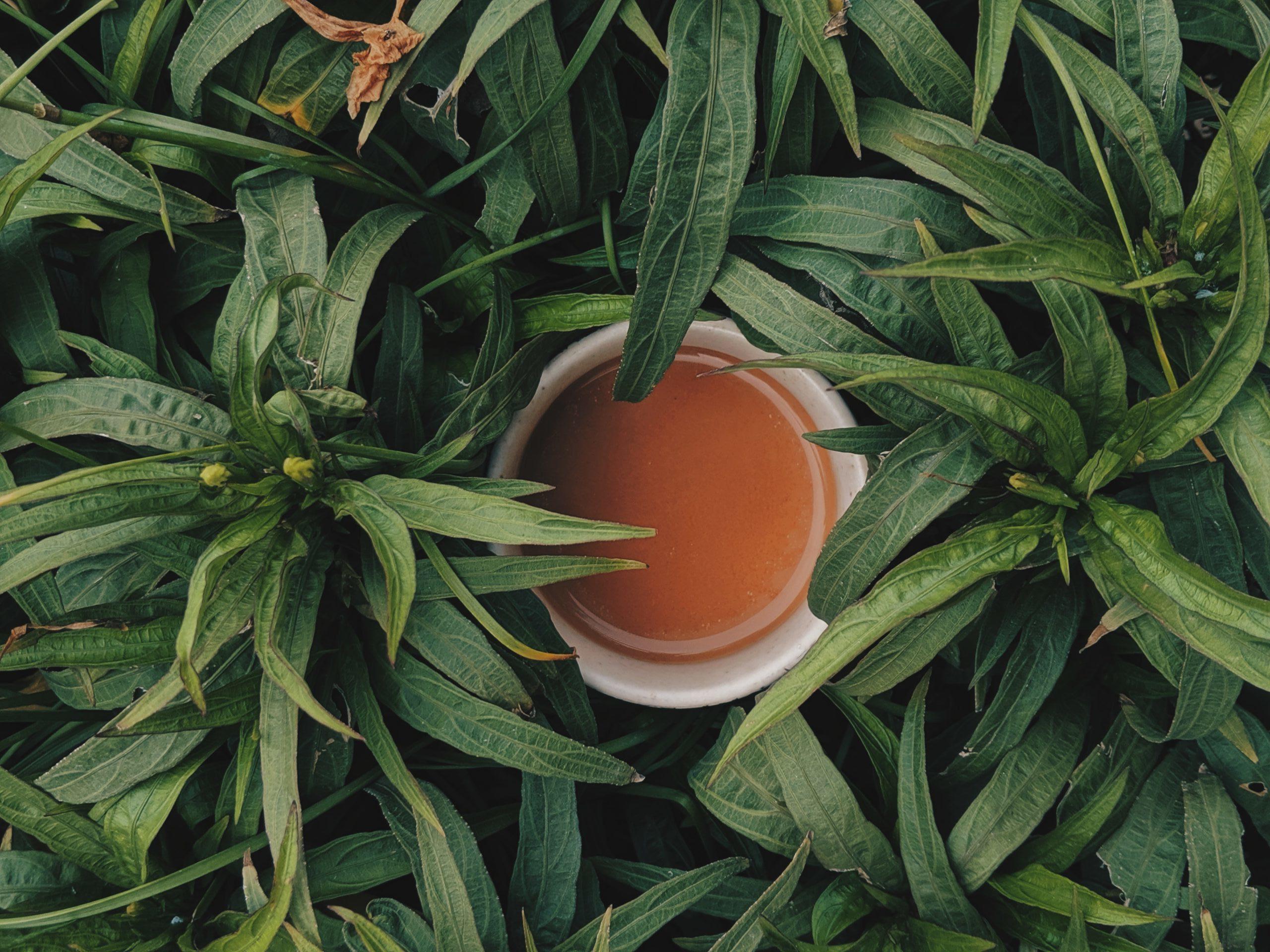 15 façons de réutiliser les sachets de thé dans le jardin, la maison et pour se soigner